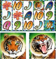 Great Tiger Graphics - 49er is based on real time gaming casino software
