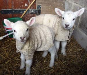 Win a lambswool sweater at DublinBet Casino
